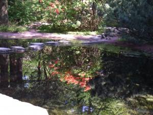 En höstpromenad i Botaniska trädgården