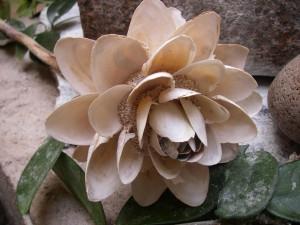 Blomma gjord av snäckskal