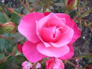 En ros för dina tankar