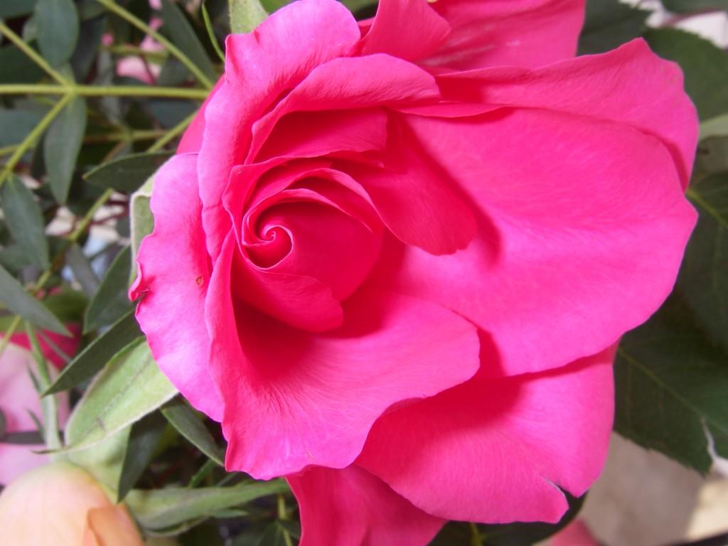 En ros till hemtjänsten