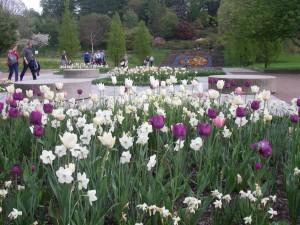 Botaniska Trädgården i  Göteborg 2013.05.21