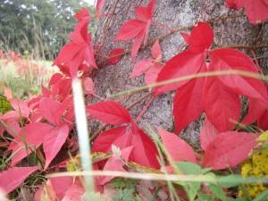 Oktoberfärger