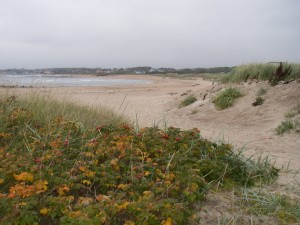 Klitterna vid Vejbystrands strand