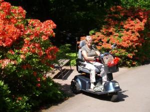 På höstpromenad i Göteborgs Botaniska trädgård, där man kan låna elmoppe