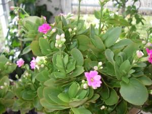 Nu kommer blommorna i verandan
