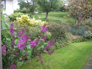Trädgården i en fantastisk junigrönska