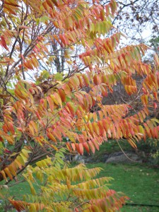Hösten har kommit