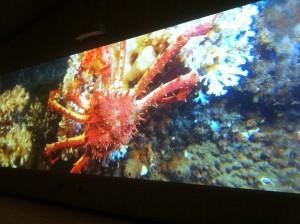 Bilder tagna från ett fantastiskt bildspel  bildförevisning i Naturum om Kosterhavets korallrev