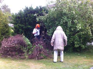Mamma kollar trädfällningen i trädgården